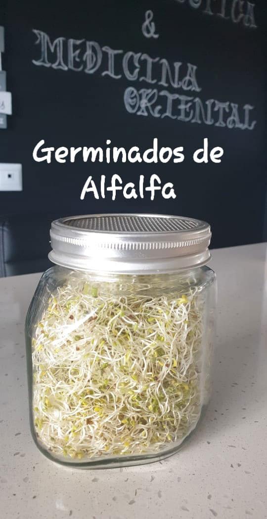 Receta - Germinados de Alfalfa